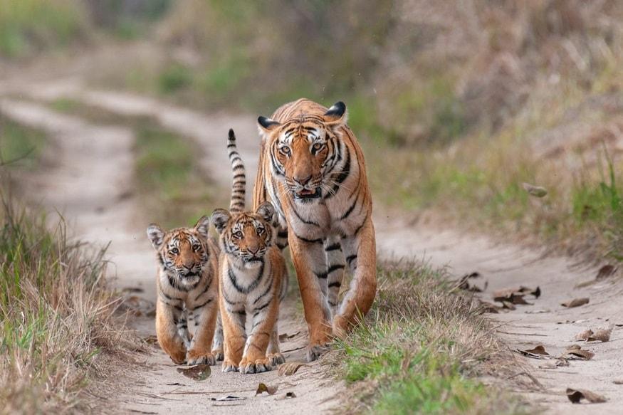 corbett tiger reserve, पांखरो की टाइगर सफारी का काम भूमि हस्तांतरण के चलते शुरू नही हो सका था. अब सेंट्रल जू ऑथॉरिटी (CZA), नेशनल टाइगर कंजरवेशन ऑथॉरिटी (NTCA) के साथ ही भारत सरकार ने इसके भूमि हस्तांतरण को सैद्धांतिक स्वीकृति दे दी है.