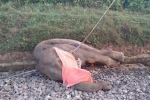 ट्रेन की चपेट में आकर हाथी की मौत पर रेलवे और वन विभाग में ठनी, केस दर्ज