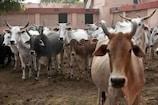 कोरोना से जूझते महाराष्ट्र में नया संकट, कांगो बुखार को लेकर पालघर में अलर्ट