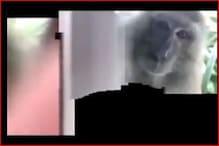 VIDEO: गहरी नींद में सो रहा था युवक, बंदर ने उठाया मोबाइल और लेने लगा सेल्फी