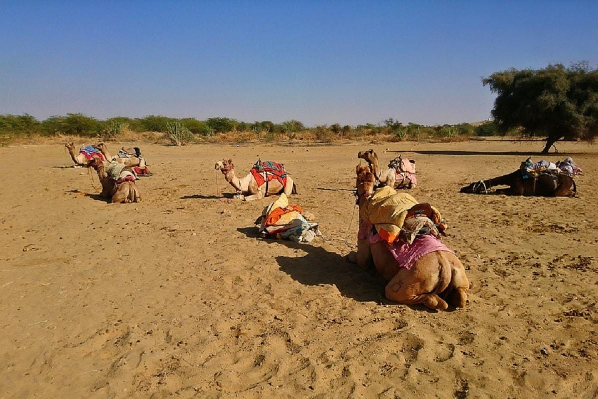 Desert, Thar, Rajasthan, River,