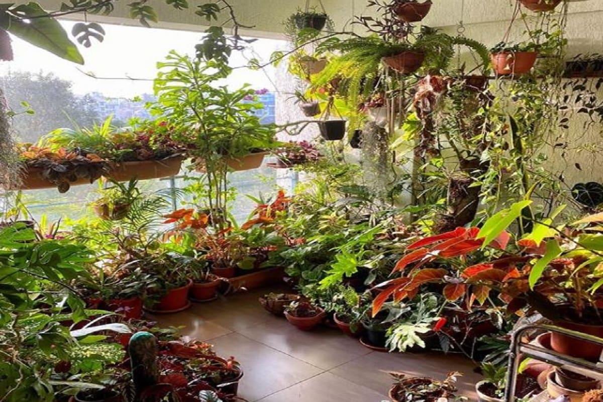 टेरेस गार्डनिंग (Terrace Gardening) के जरिये आप घर की छत पर लौकी, करेला, भिंडी, खीरा आदि कई तरह की सब्जियां (Vegetables) उगा सकते हैं. वहीं फूलों से महकती हरी भरी छत भी मन को सुकून देती है और माहौल को खुशगवार बना देती है. अगर आप भी टैरिस पर गॉर्डन बनाने की सोच रहे हैं, तो कुछ बातों पर ध्यान देना बेहद जरूरी है. आप भी फॉलो कीजिए टैरेस गार्डनिंग के ये टिप्स- Image Credit /Instagram mayinlohr