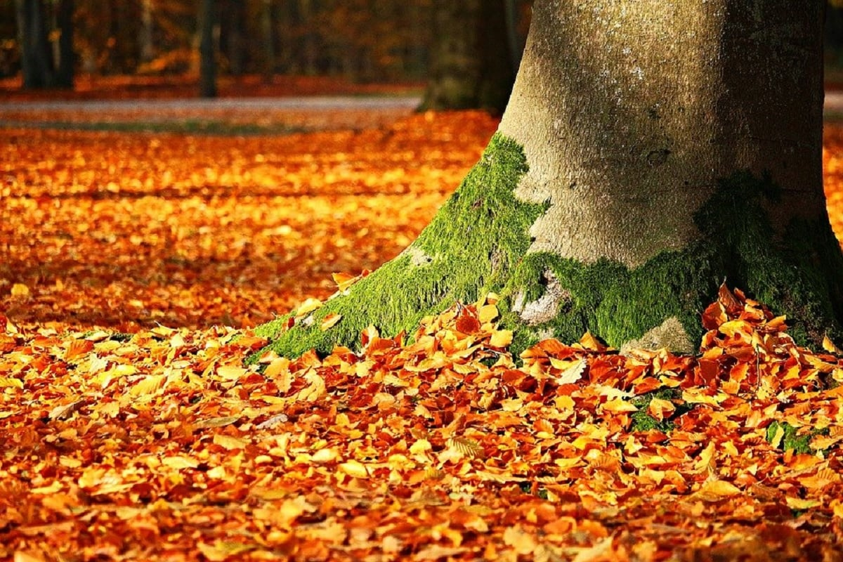 Environment, climate changes, Trees, Deciduous Trees, Leaves, shedding of leaves, autumn, fall, Summer,