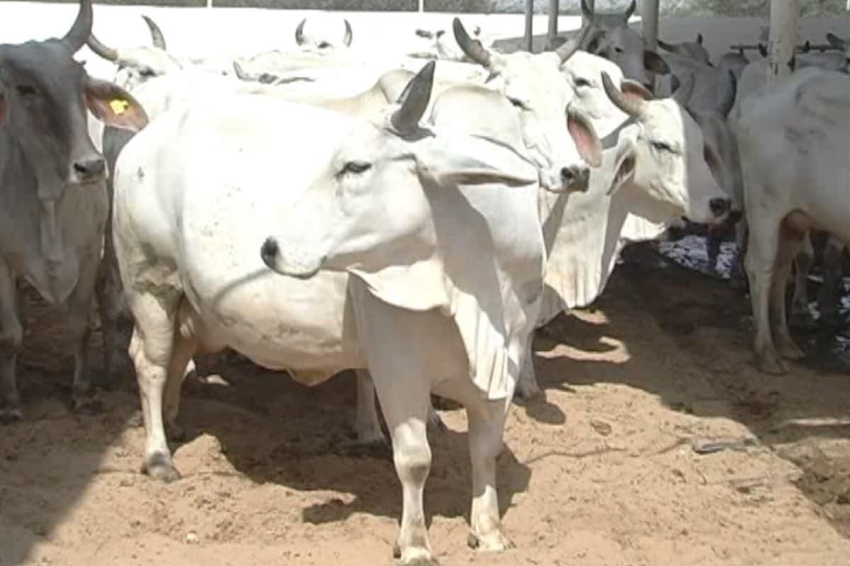 गाय के गोबर से उत्पाद बनाकर गाय के उपयोग को लेकर लोगों को जागरुक भी किया जा रहा है. ताकि गौ पालन देश में बढ़े.