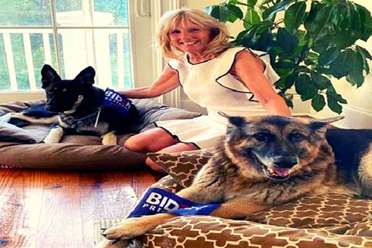 Jill Biden pet