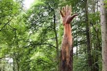 आर्टिस्ट ने तूफान से क्षतिग्रस्त पेड़ को दिया अनोखा रूप, देखिए तस्वीरें