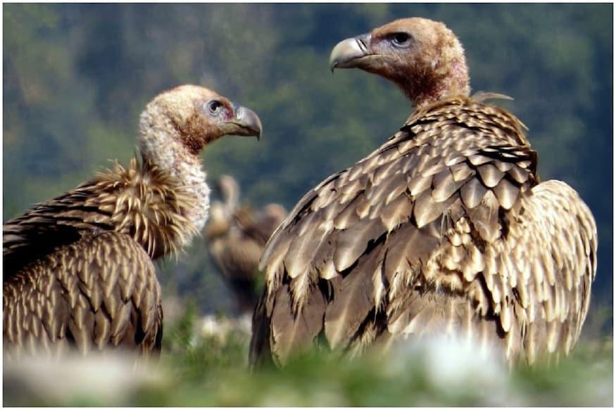 पक्षियों की आबादी में सबसे अधिक गिरावट वाले भारत में सरकारी प्रयास