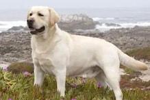 MP: मालिकाना हक सुलझाने के लिए कुत्ते की होगी DNA जांच