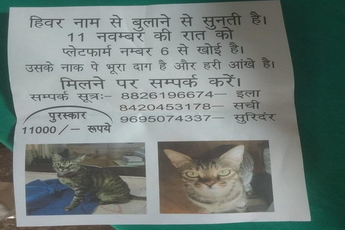 gorakhpur cat