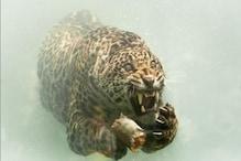 जगुआर ने पानी के अंदर यूं किया शिकार, खतरनाक PHOTOS देख हो जाएंगे हैरान