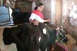 उदयपुर: पिता के साथ गाय के तबेले में हाथ बंटाने वाली सोनल शर्मा बनीं जज