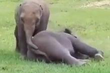 हाथी के बच्चों ने ऐसे खेली फुटबॉल, Video देखकर हर कोई रह गया हैरान