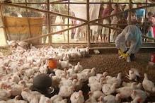 जापान में बर्ड फ्लू का कहर, जल्द मार दी जाएंगी 11 लाख मुर्गियां