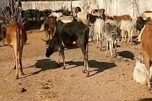 ललितपुर: गौ-आश्रय में गायों की मौत मामले में DPRO, बीडीओ समेत 8 खिलाफ FIR