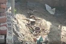 हरदोई : छोटे से नेवले के सामने बौनी पड़ गई लंबे सांप की जंग - देखें Video