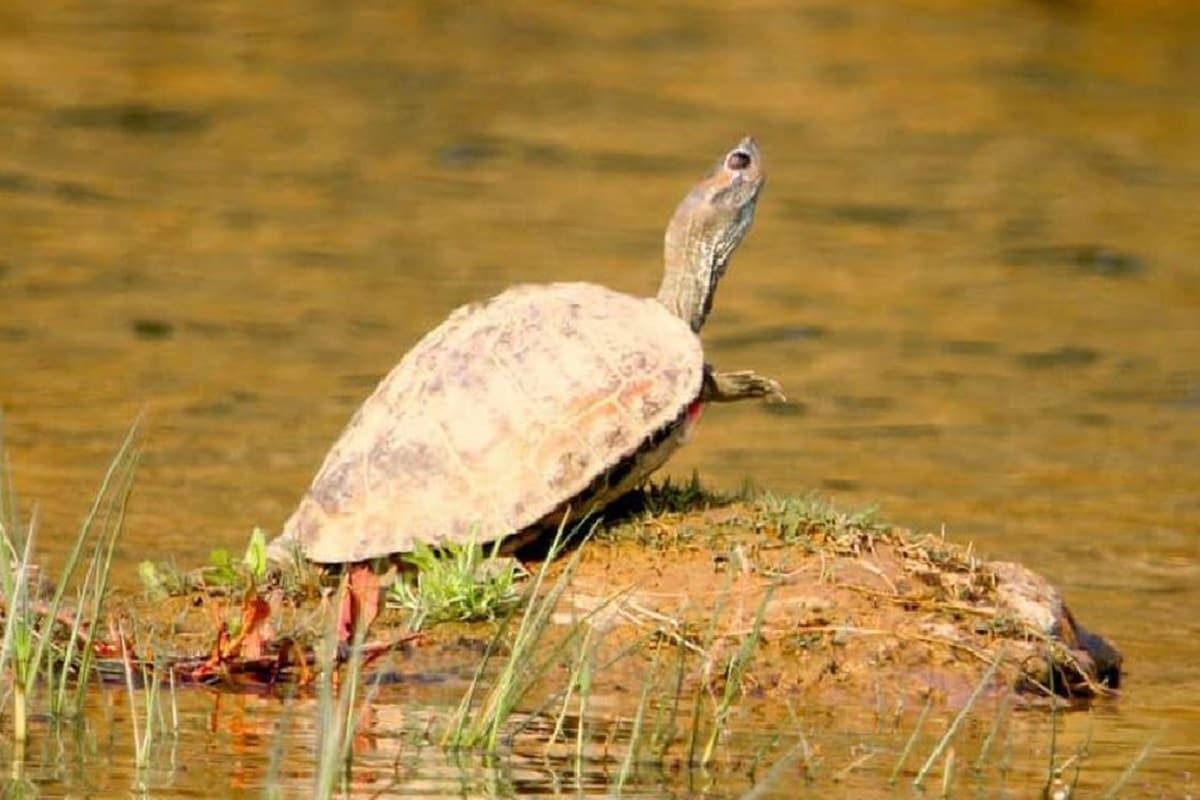 turtoise3