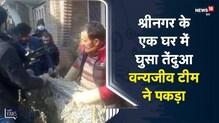 Kashmir | Srinagar के एक घर में घुसा तेंदुआ वन्यजीव टीम ने पकड़ा | Viral Video