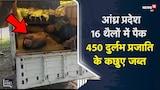Andhra Pradesh | 16 थैलों में पैक दुर्लभ प्रजाति के 450 Turtle जब्त | Viral Video