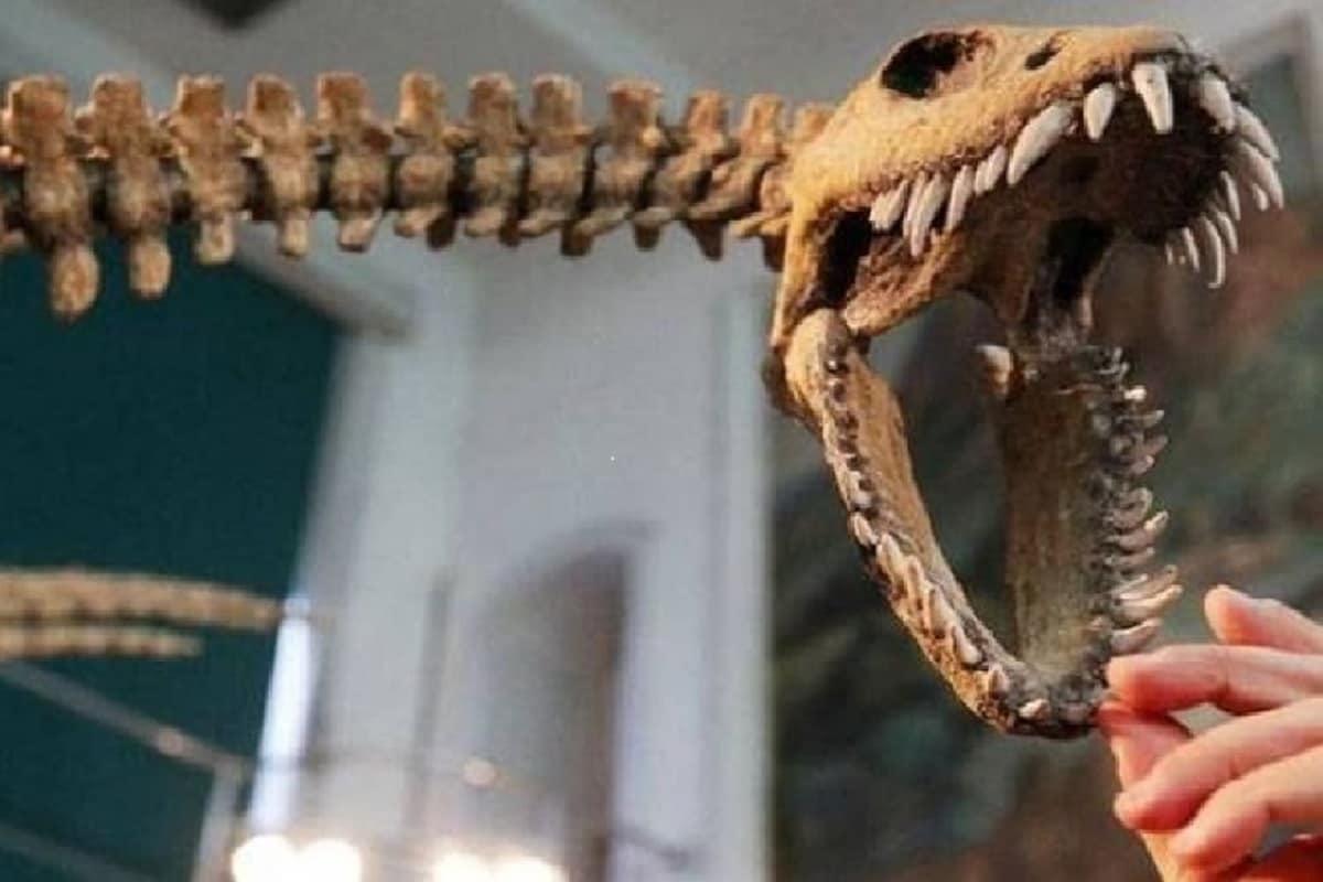 , Dinosaurs, duckbilled dinosaurs, Fossils, palaeontologists, Species, Tube-crested, Parasaurolophus