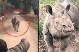 Assam में वन अधिकारियों के पीछे पड़ा Rhino, देखिए वीडियो
