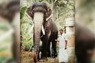 PICS: कई फिल्मों में नजर आ चुके हाथी की हार्ट अटैक से हुई मौत, फैंस दुखी