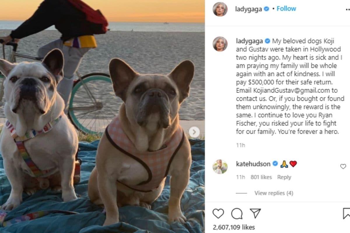 Lady Gaga, Lady Gaga dogs recovered safely, Bulldogs, Dog, Crore, Lady Gaga 2 Bulldogs, 3 Crore, लेडी गागा, लेडी गागा के कुत्ते