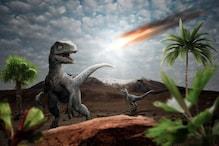 इंसानी 'पूर्वजों' का मिला पुरातन जीवाश्म, जिन्होंने खत्म होते देखे थे डायनासोर
