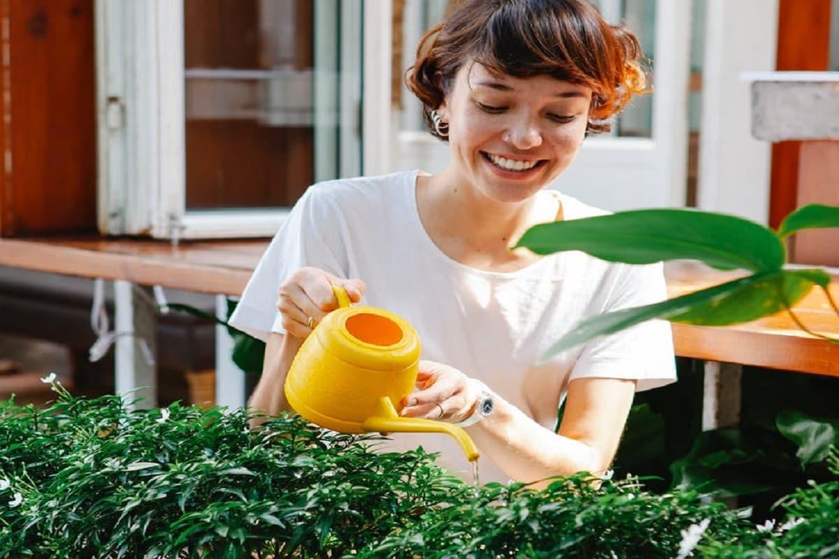 Grow Green Chillies: अगर घर में कच्ची जगह न हो तो आप इसे गमले या फिर कंटेनर में भी हरी मिर्च (Green Chillies) उगा सकते हैं. इसके लिए आपको किसी बड़े बगीचे की जरूरत नहीं है. इसमें कुछ गर्डिंग टिप्स (Gardening Tips) आपके आएंगे बहुत काम. आइए जानें इन टिप्स के बारे में-Image Credit:Tim-Douglas/Pexels