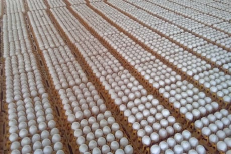 Exportable certificate will be needed to send eggs abroad