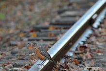 असम का वो रहस्यमयी गांव, जहां हर साल हजारों पक्षी खुदकुशी करने आते हैं