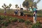 हरियाणा: नहीं मान रहे किसान, अब चरखी दादरी में सब्जी की फसल पर चलाया ट्रैक्टर