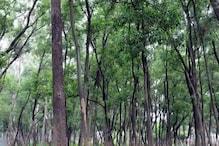रामगढ़ में सरकारी बाबुओं का खेल, 352 एकड़ वनभूमि कर दी 282 लोगों के नाम