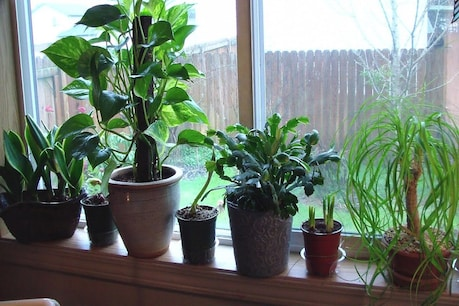 Indoor plants can easily be found in any good nursery at a very low price.