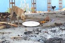शर्मसार और विचलित करने वाला Video, आगर में अधजले शवों को श्वान नोच रहे हैं
