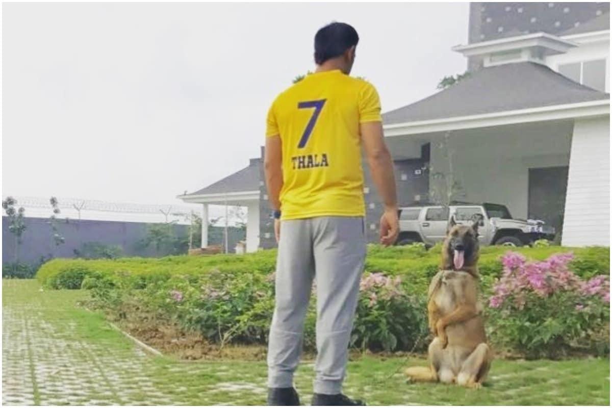 महेंद्र सिंह धोनी को गॉड गिफ्टेड क्रिकेटर माना जाता रहा है. एक दशक से भी अधिक समय से उन्होंने अपनी विस्फोटक बल्लेबाजी से टीम इंडिया में नए उदाहरण स्थापित किए हैं. एक लीडर के रूप में उनकी क्षमताएं अद्भुत थीं. क्रिकेट में उनके दिमाग को सबसे तेज माना जाता है. कई बड़े-बड़े दिग्गज क्रिकेट में धोनी के दिमाग की मिसाल देते हैं. माइंड था. पिछले साल अगस्त में क्रिकेट से संन्यास लेने के के बाद धोनी अब आईपीएल में खेलने के साथ-साथ अपने अलग-अलग बिजेनस वेन्चर्स पर फोकस कर रहे हैं. आइए धोनी के अलग-अलग बिजनेस वेन्चर्स पर एक नजर डालते हैं. (MS Dhoni/Instagram)