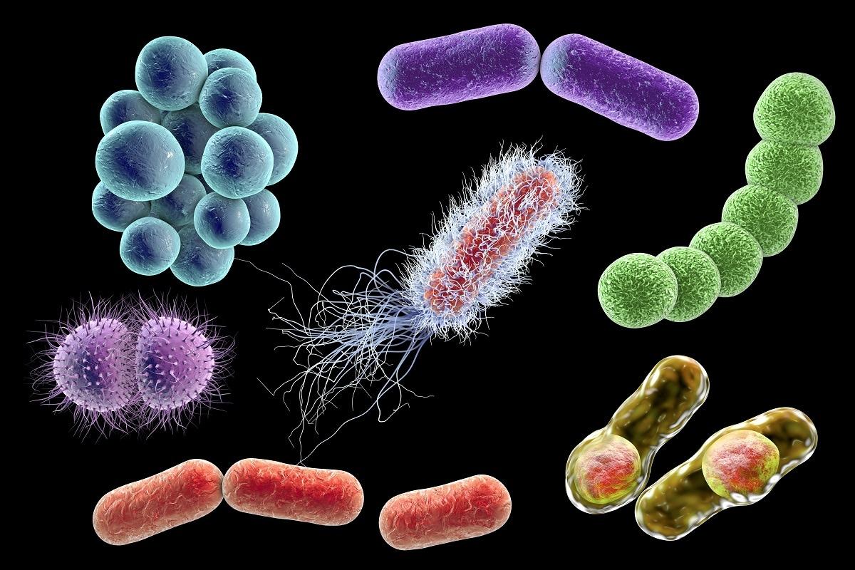 Microbes, Microbial life, Evolution of life, Biodiversity, Life on Earth, diversity in Microbes, Virus, Bacteria, SARS CoV-2, Covid-19, Coronavirus,