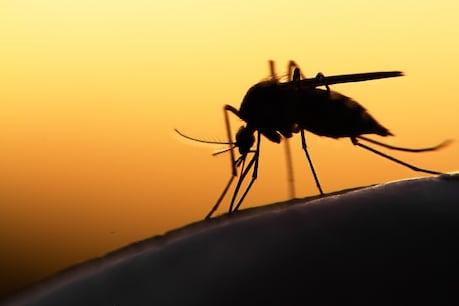 शहर में मच्छरों (Mosquitoes) की संख्या तेजी से बढ़ना एक खतरनाक संकेत माना जा रहा है. एक तरफ कोरोना दूसरी तरफ डेंगू और मलेरिया का खतरा भी बढ़ने के आसार हैं.  (प्रतीकात्मक तस्वीर: shutterstock)