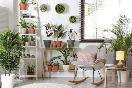 Some plants are very useful to reduce the toxic gases spread in the environment.  These plants are also called air filtering plants.  Image-shutterstock.com