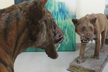 पटना का अजायबघर : शेर से लेकर तितलियों तक की 500 प्रजातियां संरक्षित हैं यहां