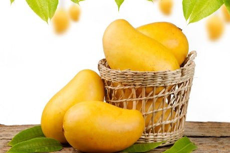 Learn how to identify sweet and ripe mangoes (credit: shutterstock)