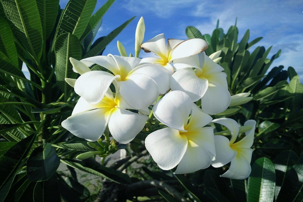 ये फूल लाएंगे खुशहाली घर या ऑफिस में गेंदा, चंपा के पौधे लगाना शुभ माना जाता है. वास्तु के अनुसार गेंदा और चंपा के पौधे घर में सकारात्मक शक्ति का प्रवेश करवाते हैं, जिससे मानसिक तनाव में कमी आती है.