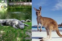 कुत्ते-बिल्ली ही नहीं, इन 6 अजीबोगरीब जानवरों को भी कानूनी तौर पर पाल सकते हैं आप, जानिए इनके बारे में सब कुछ