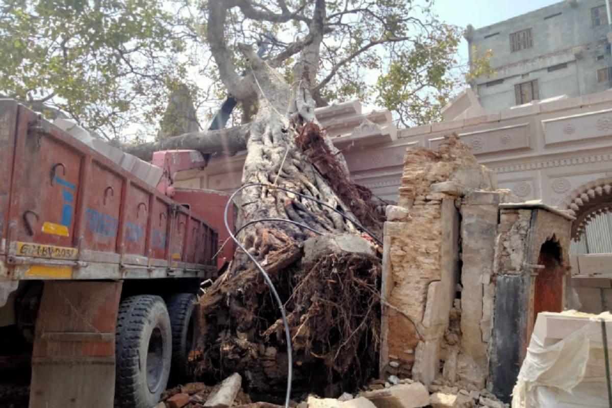 vns akshayvat tree