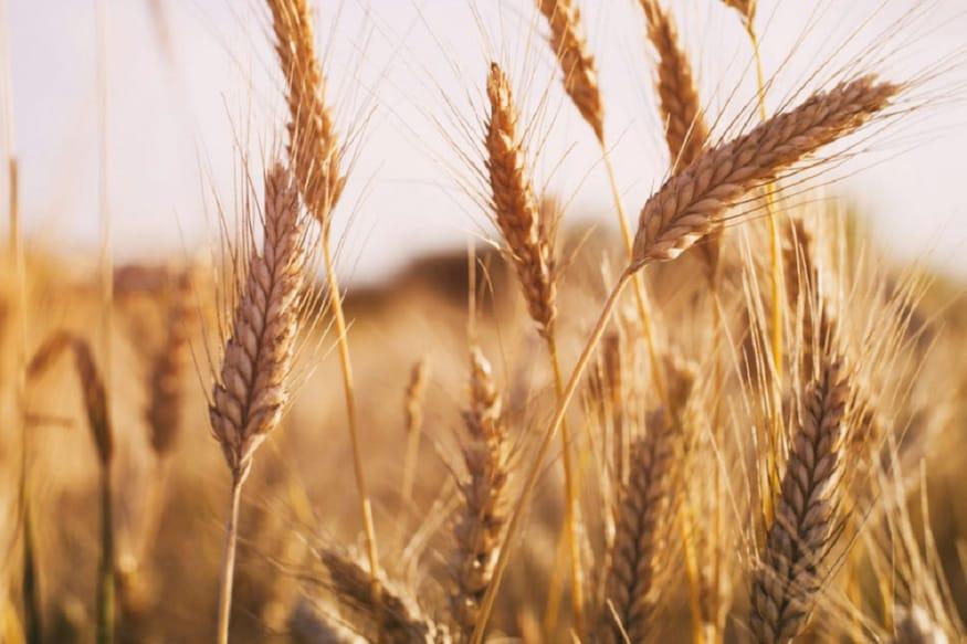 बिरजू से शंभू तक आज भी 'ओह रे किसान'