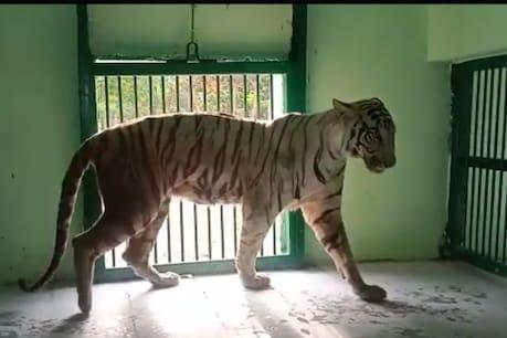 The two big zoos of Nainital and Dehradun have been closed till May 15.  (File)