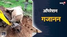 Elephant Rescue  | गड्ढे में गिरा हाथी, देखें पूरा Rescue Operation | Viral Video