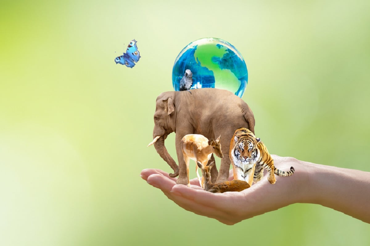 Earth Environment, International Day for Biological Diversity, Biodiversity, Biological Diversity, Mass Extinction, Extinction, Human Activities,