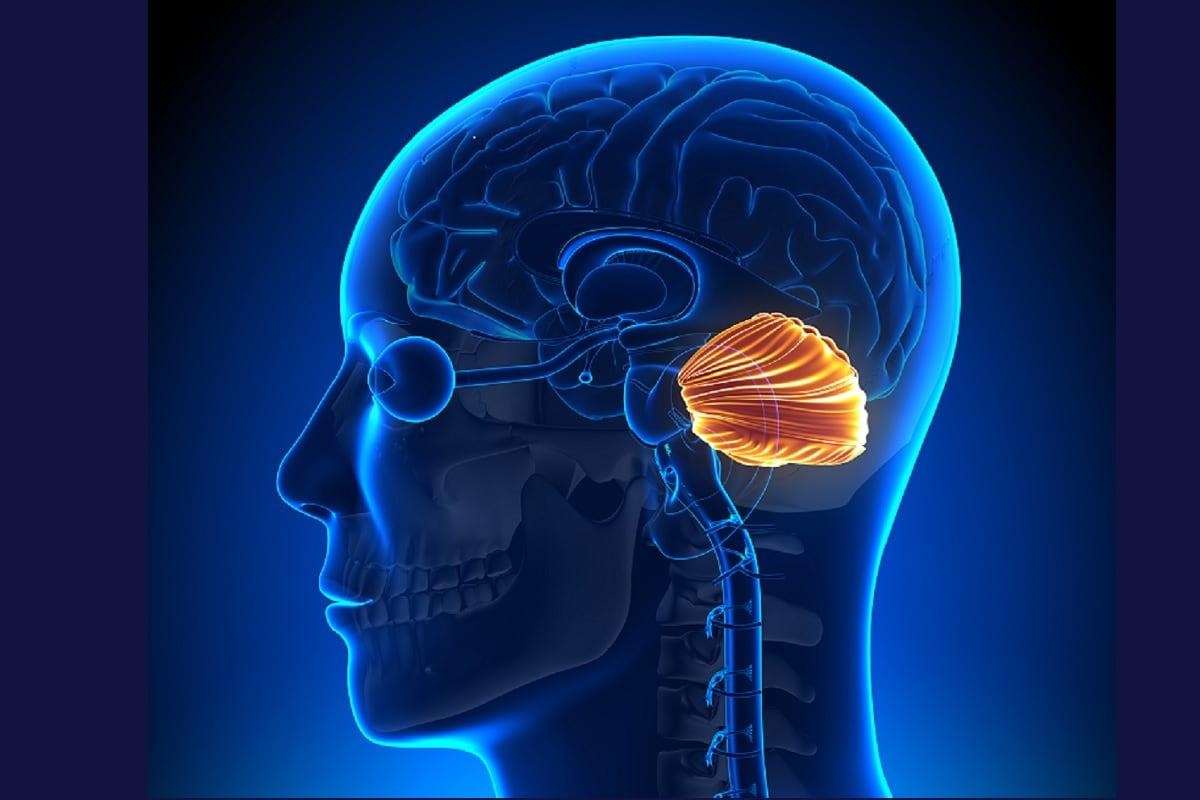 Health, Brain, evolution, Human Brain evolution, cerebellum, Epigenetic Differences, Genome, DNA, DNA Sequence, Brain Tissue, Genes, Prefrontal cortex,