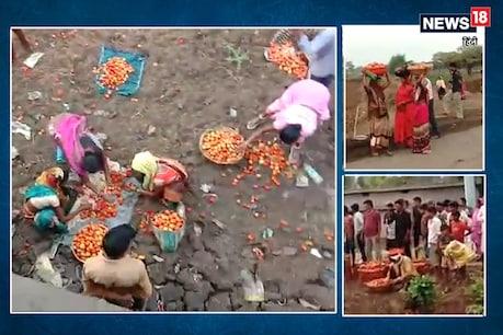 बिलासपुर में पिकअप वैन पलटने के बाद टमाटर लूटने के लिए लोगों में मची होड़