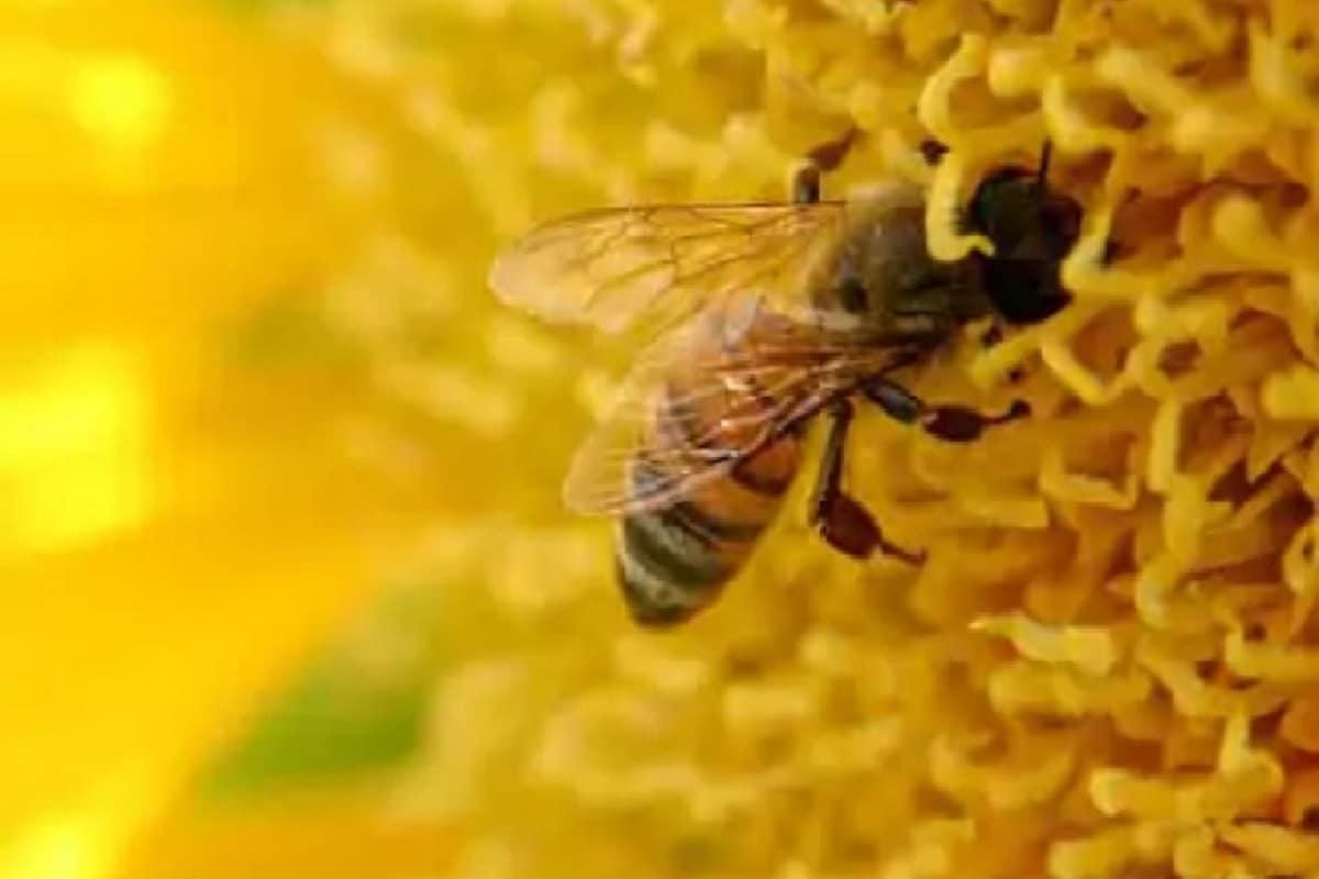 Health, Covid-19, Coronavirus, Covid-19 Test, RT-PCR test, Honeybees, Corona Test, Covid Test, bees,